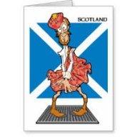 Scots Bob