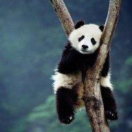 PandaOnWelfare