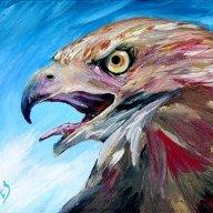 Hawk's Eye