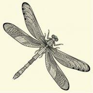 Dragonfly Joe
