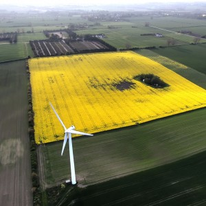 Yellow field and windmill