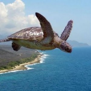FlyingOceanTurtle