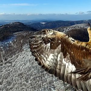 Eagle attack on drone in Kremnicke mountains in Slovakia