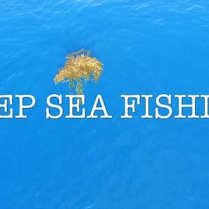 Deep Sea Fishing SoCal on Vimeo
