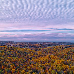 Foliage And Clouds